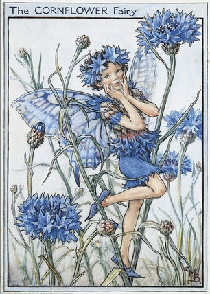 Cornflower Fairy by Cicely Mary Barker
