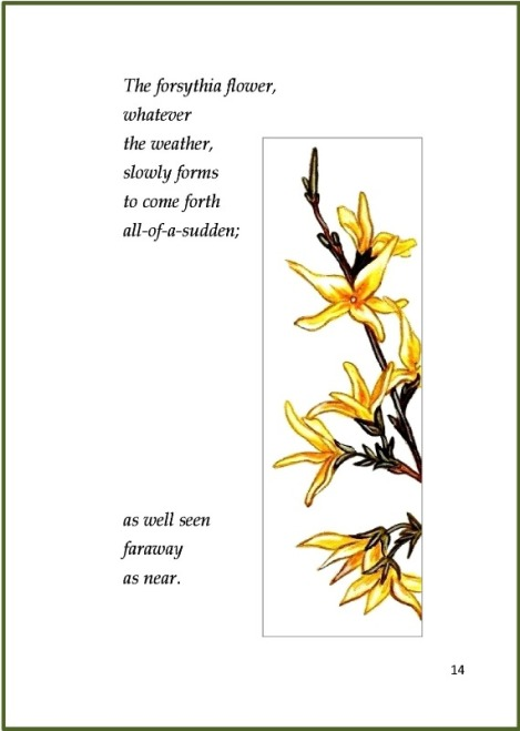 Forsythia Flower Page 14 with border