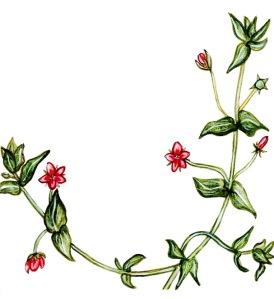 Scarlet Pimpernel Page 30