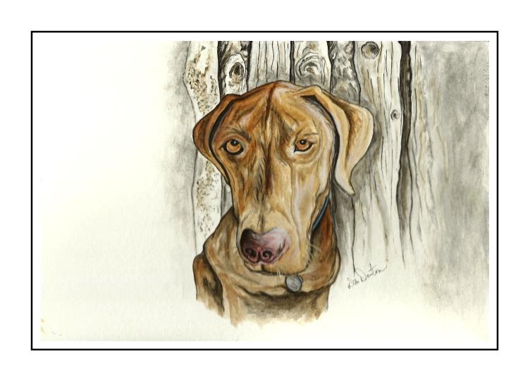 Pet Portraits by DM Denton (3/6)