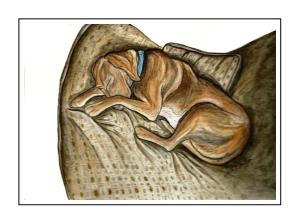 Copper Sleeping1_pe mat frame