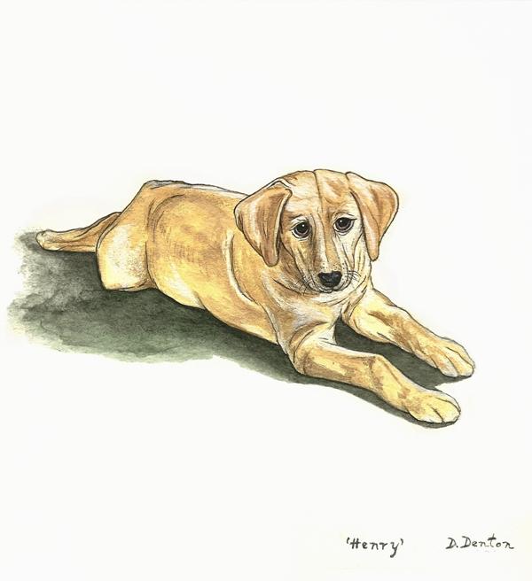 Pet Portraits by DM Denton (2/6)