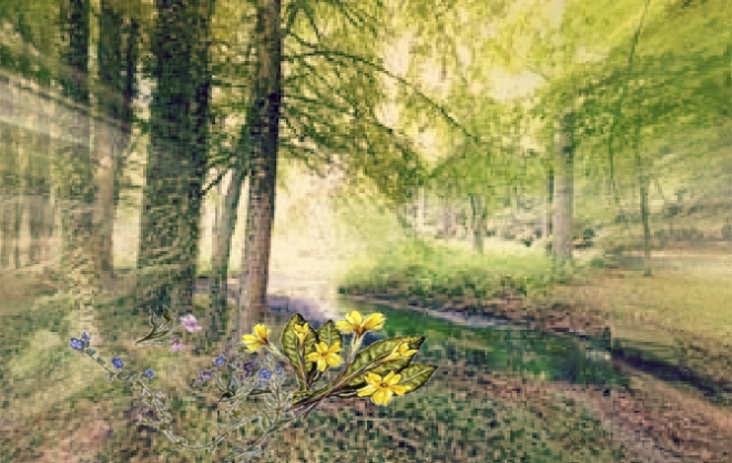 Spring flowers in woods