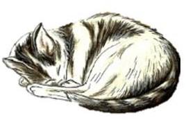 Snow White Cat