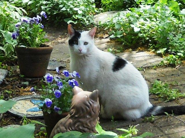 Butch in Garden