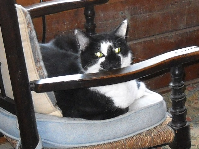 Dante on Rocking Chair
